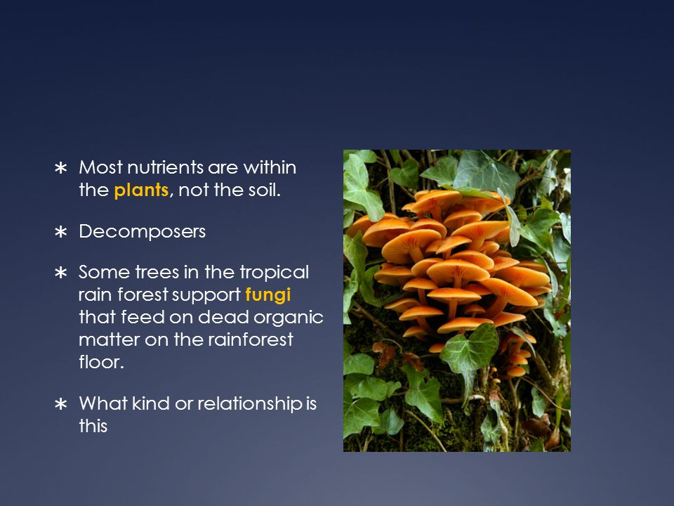 Most nutrients are within the plants, not the soil. Decomposers