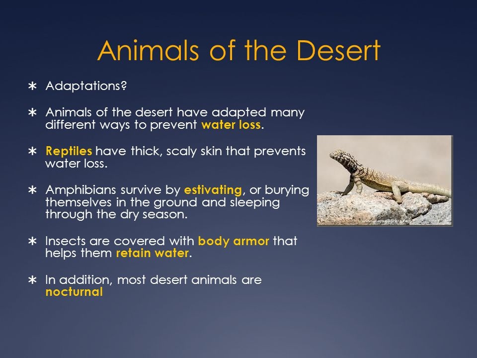 Animals of the Desert Adaptations