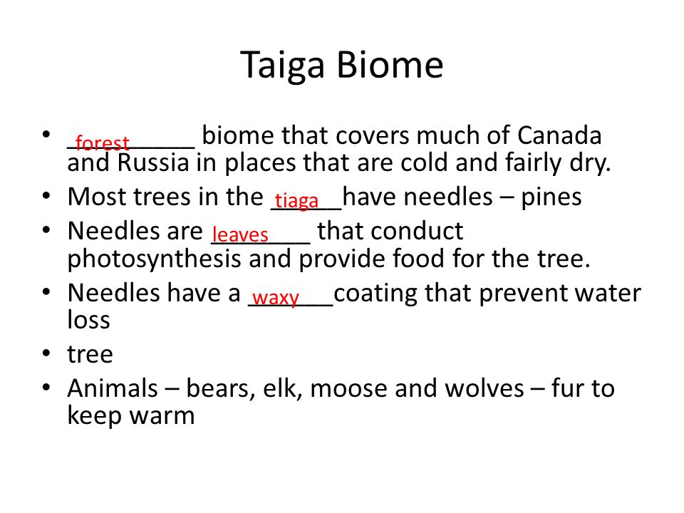 Taiga Biome _________ biome that covers much of Canada and Russia in places that are cold and fairly dry.