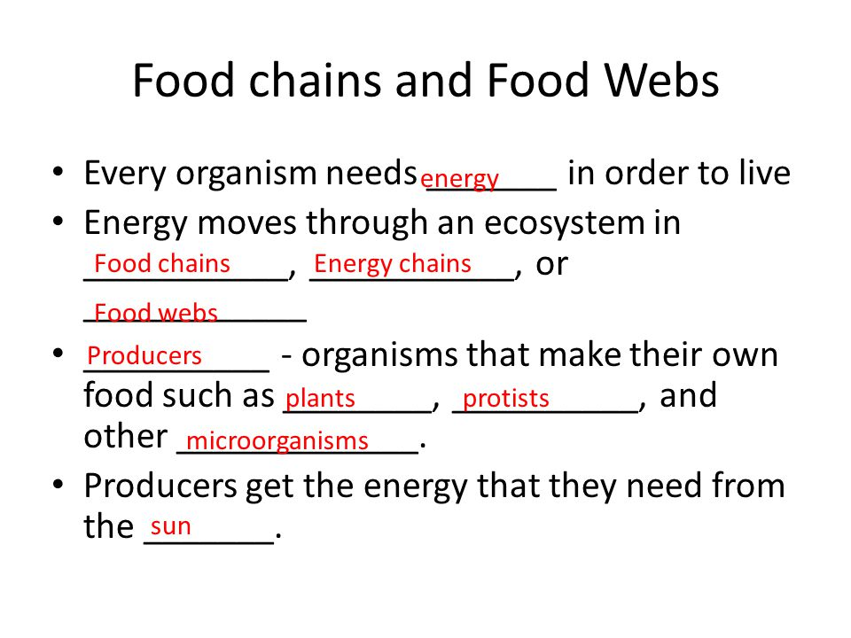 the relationship between species and organisms that make their own food