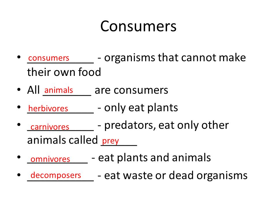 Consumers ___________ - organisms that cannot make their own food