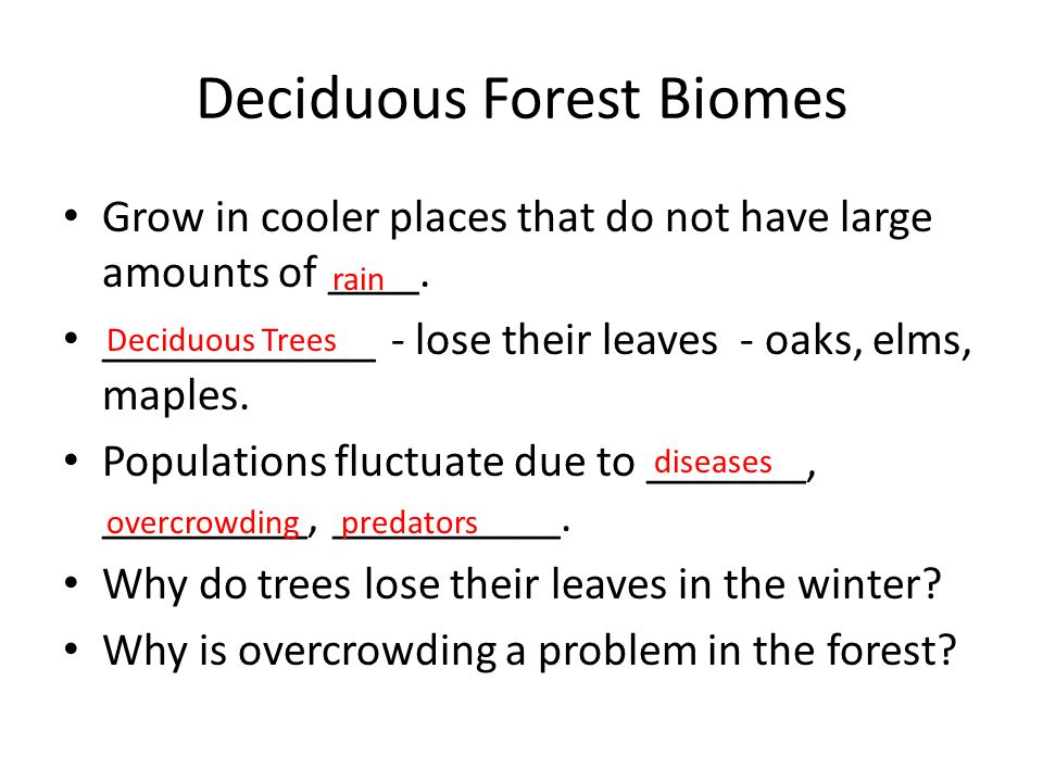 Deciduous Forest Biomes