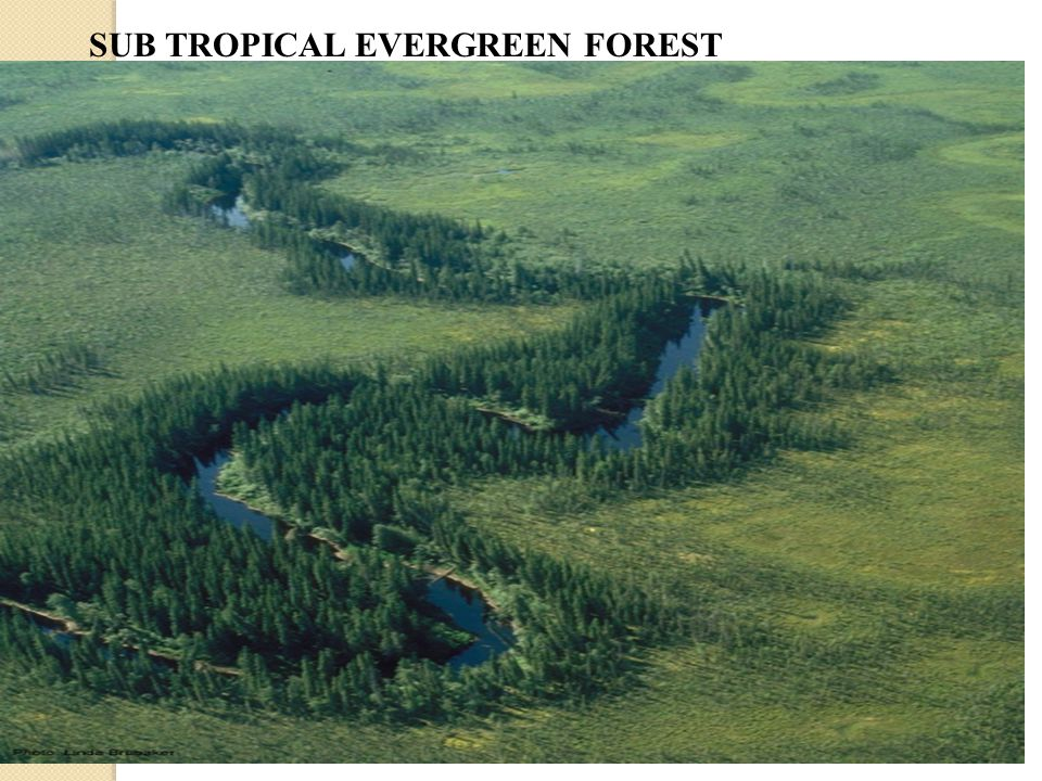 SUB TROPICAL EVERGREEN FOREST