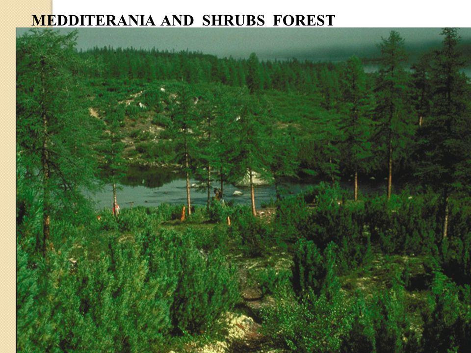 MEDDITERANIA AND SHRUBS FOREST