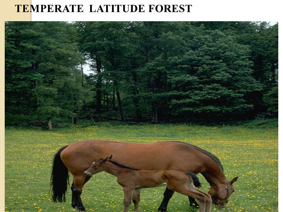 TEMPERATE LATITUDE FOREST