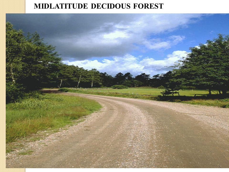 MIDLATITUDE DECIDOUS FOREST