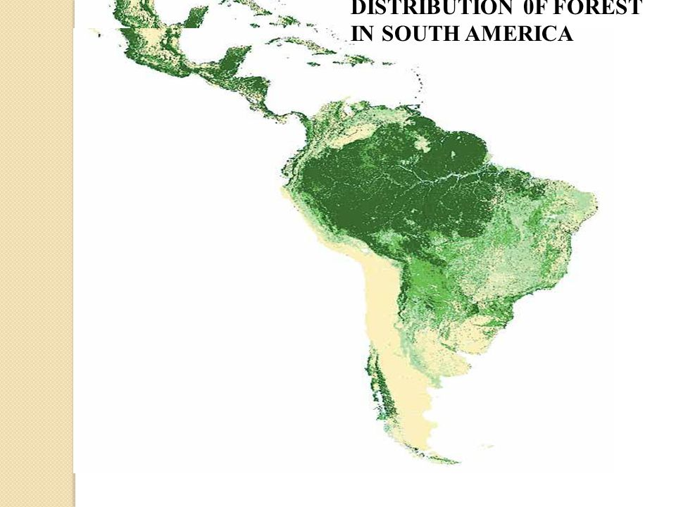 DISTRIBUTION 0F FOREST IN SOUTH AMERICA