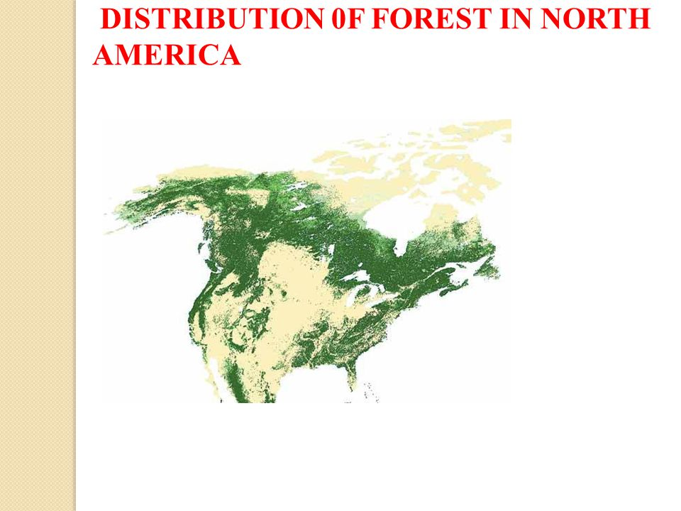 DISTRIBUTION 0F FOREST IN NORTH AMERICA