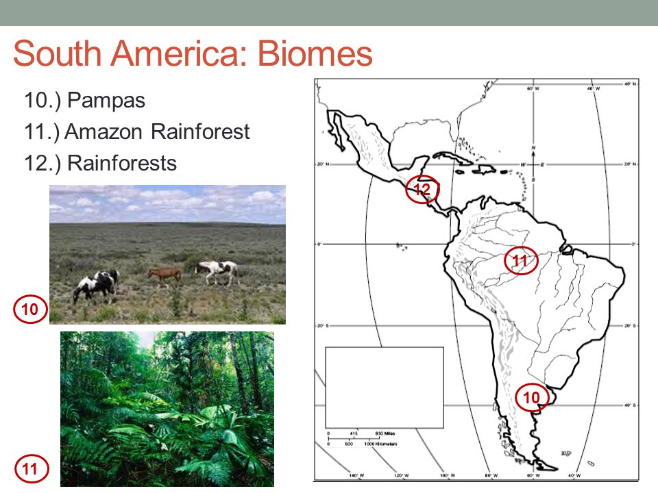 South America: Biomes 10.) Pampas 11.) Amazon Rainforest 12.) Rainforests 12 11 10 10 11
