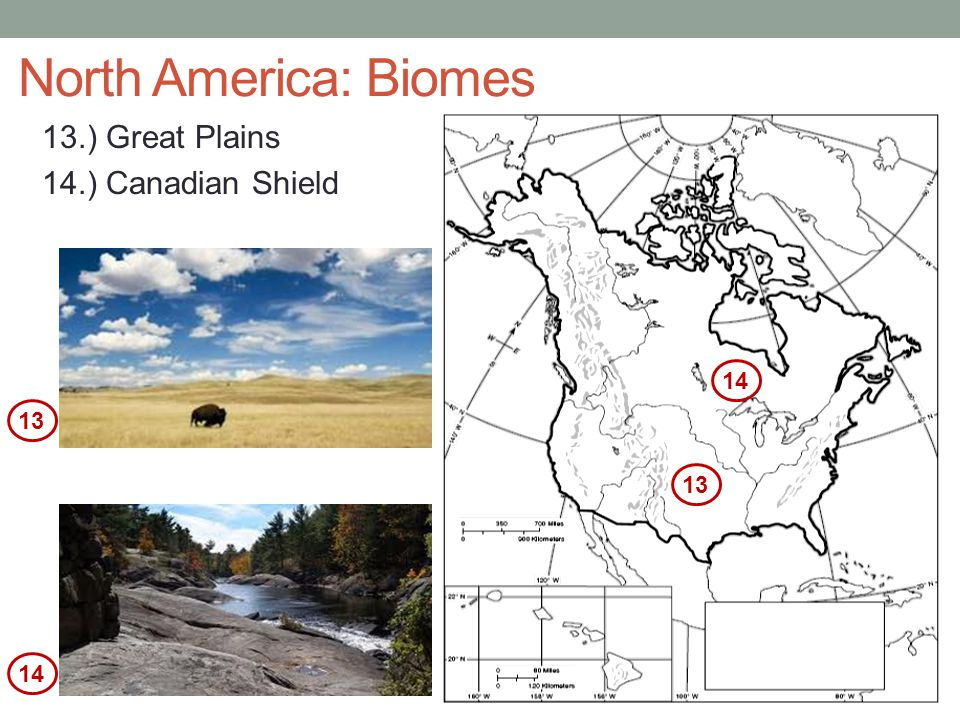 North America: Biomes 13.) Great Plains 14.) Canadian Shield 14 13 13