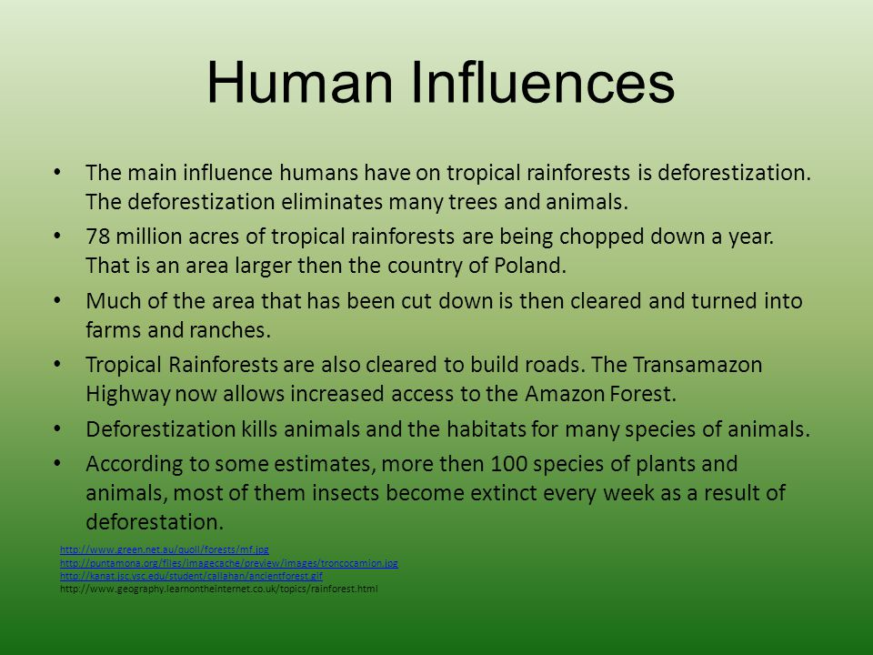Human Influences The main influence humans have on tropical rainforests is deforestization. The deforestization eliminates many trees and animals.