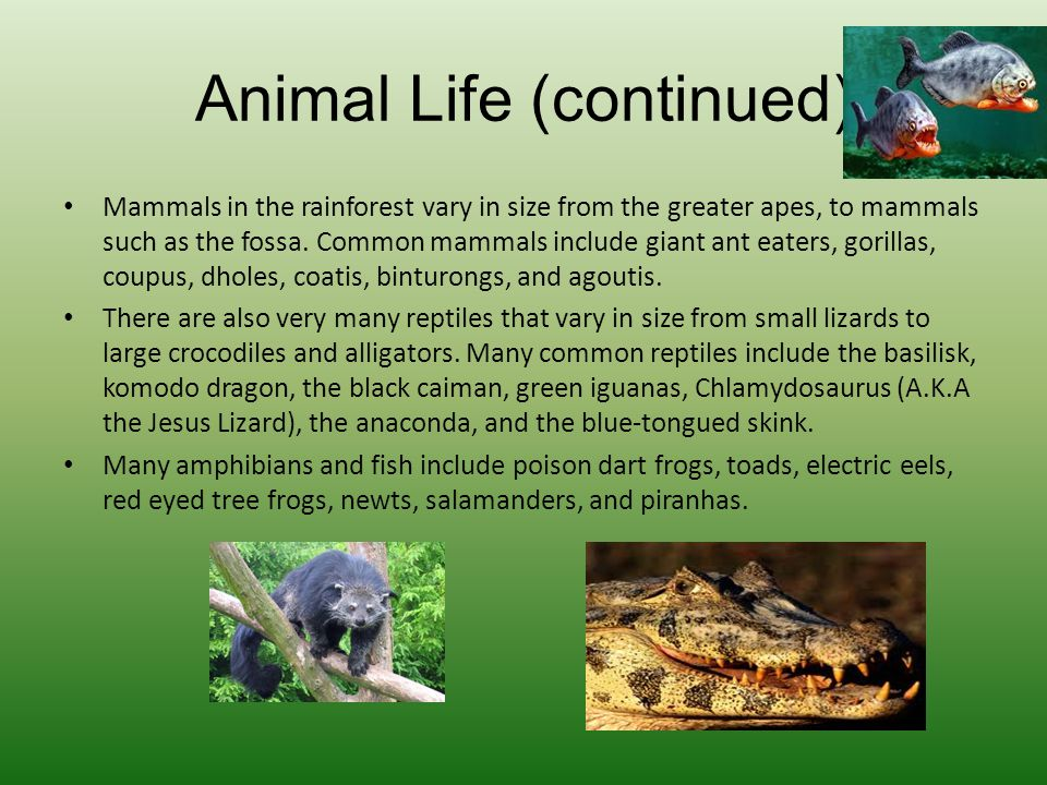 Animal Life (continued)
