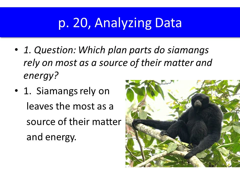 p. 20, Analyzing Data 1. Question: Which plan parts do siamangs rely on most as a source of their matter and energy