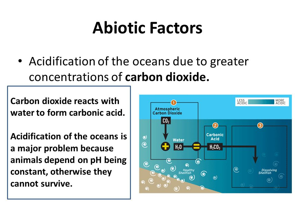 Abiotic Factors Acidification of the oceans due to greater concentrations of carbon dioxide. Carbon dioxide reacts with water to form carbonic acid.