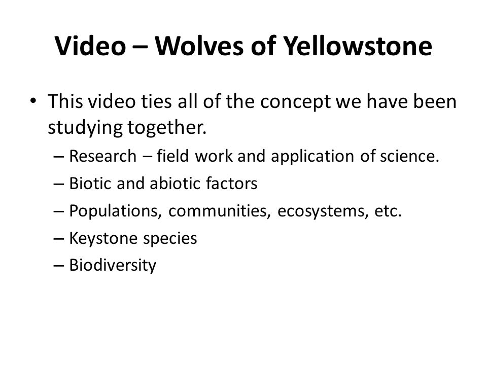 Video – Wolves of Yellowstone