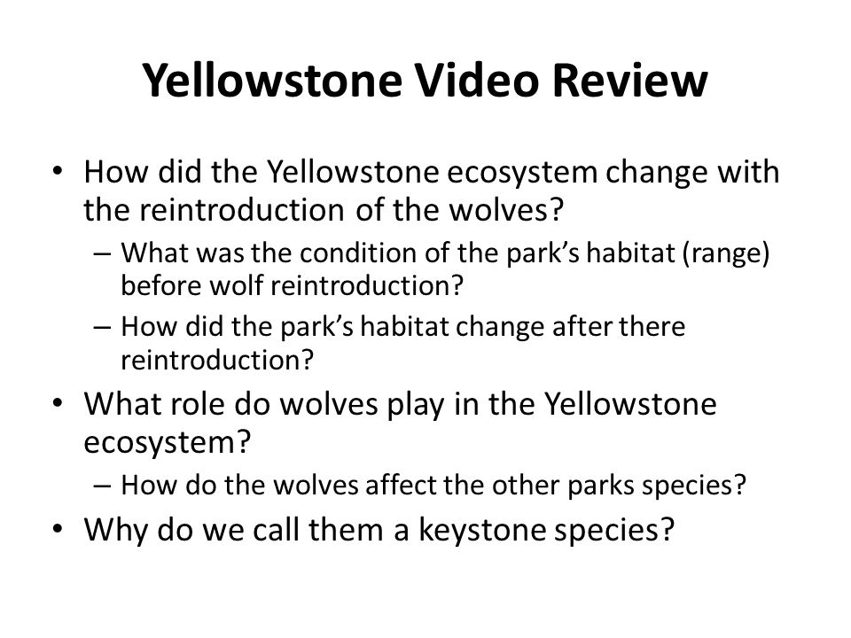 Yellowstone Video Review