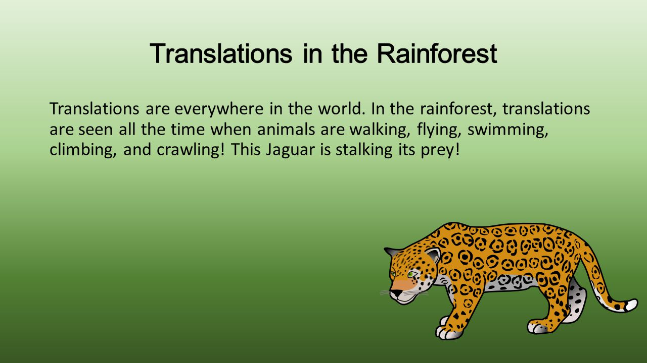 Translations in the Rainforest