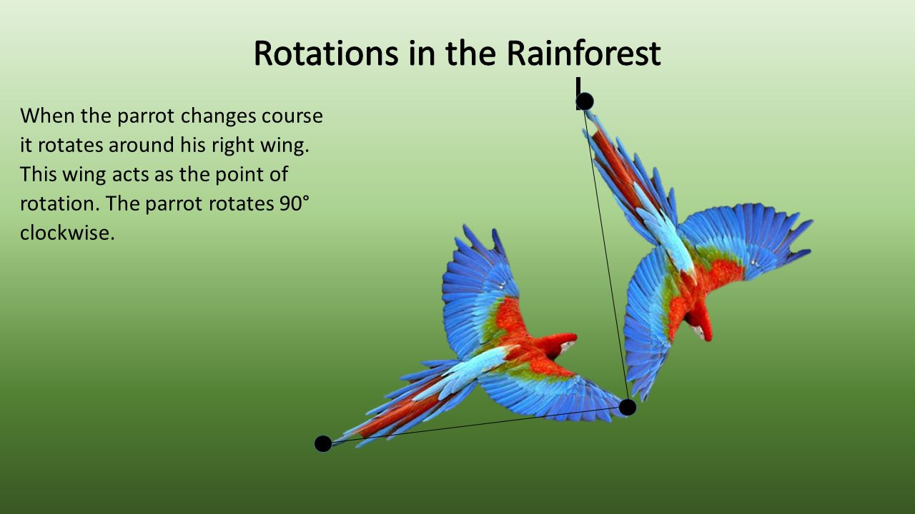 Rotations in the Rainforest