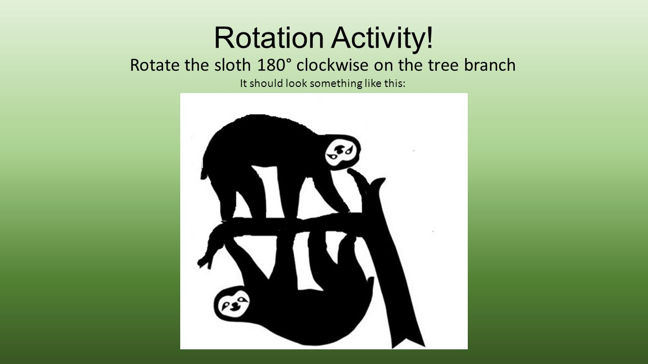 Rotation Activity! Rotate the sloth 180° clockwise on the tree branch