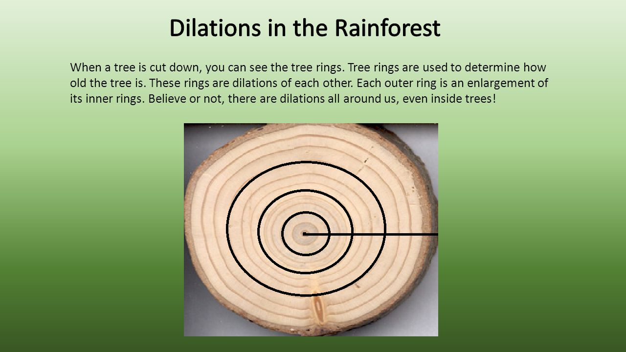 Dilations in the Rainforest