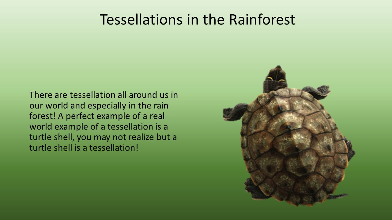 Tessellations in the Rainforest