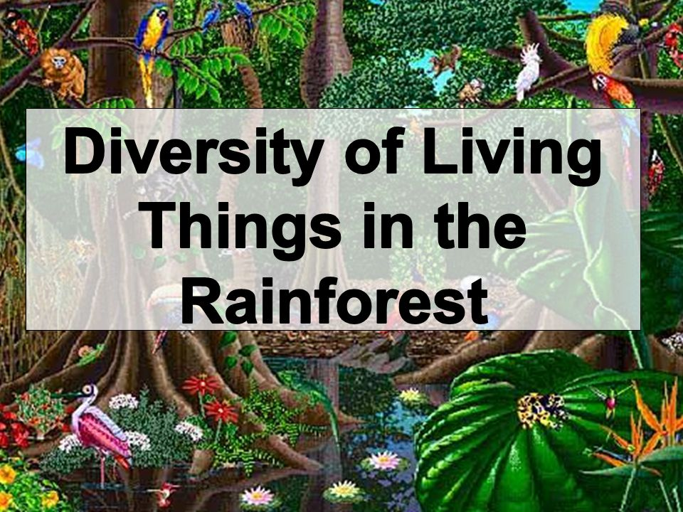Diversity of Living Things in the Rainforest