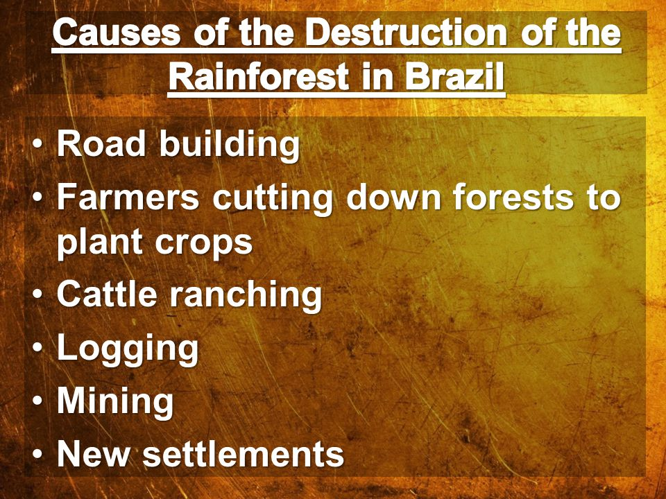 Causes of the Destruction of the Rainforest in Brazil