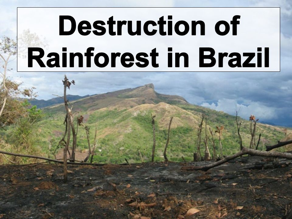 Destruction of Rainforest in Brazil