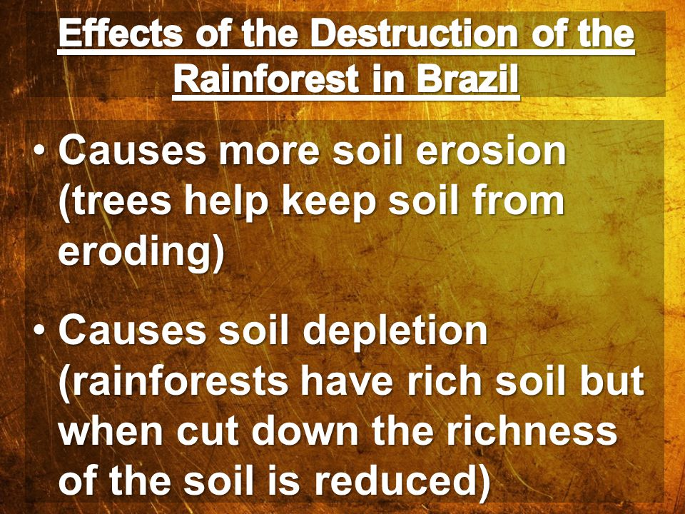 Effects of the Destruction of the Rainforest in Brazil