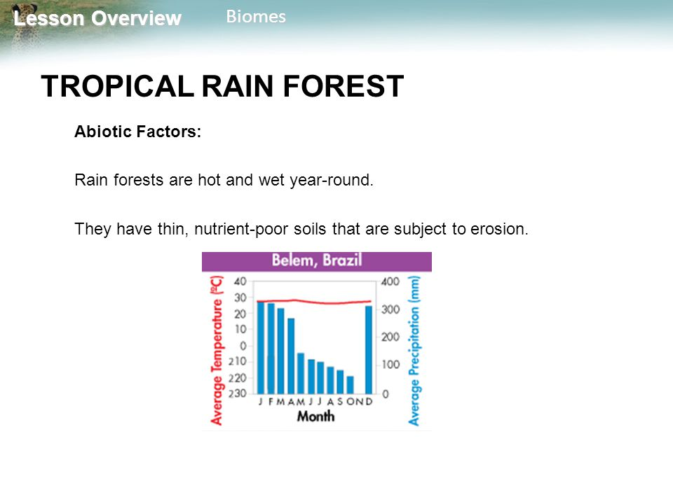 TROPICAL RAIN FOREST Abiotic Factors: