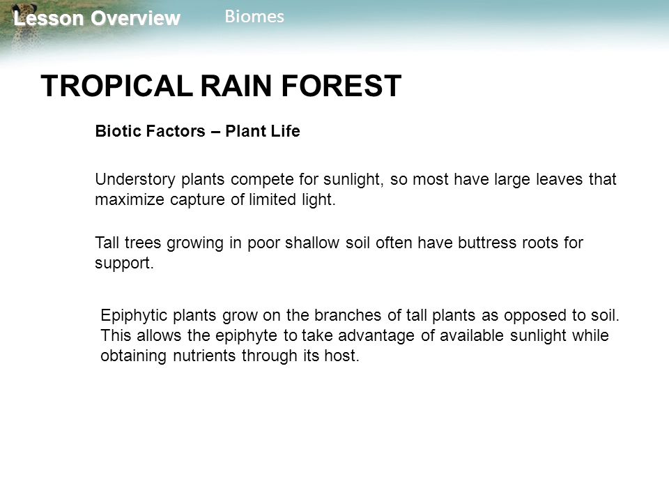 TROPICAL RAIN FOREST Biotic Factors – Plant Life