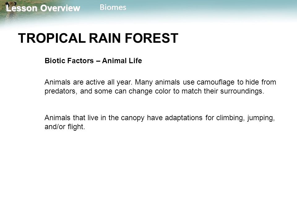 TROPICAL RAIN FOREST Biotic Factors – Animal Life