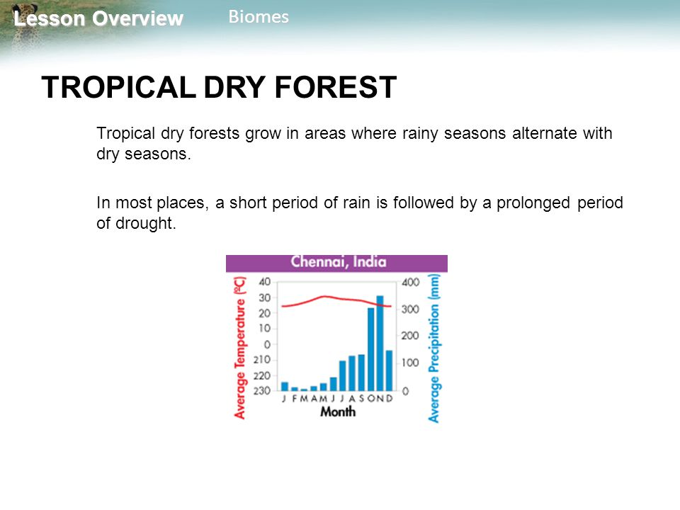 TROPICAL DRY FOREST Tropical dry forests grow in areas where rainy seasons alternate with dry seasons.