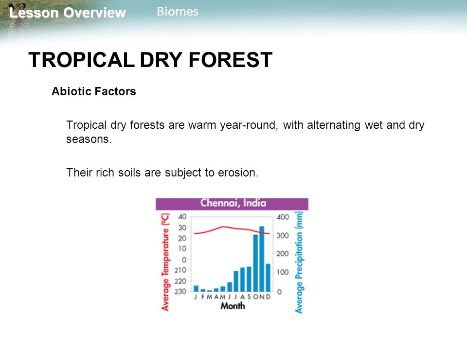 TROPICAL DRY FOREST Abiotic Factors