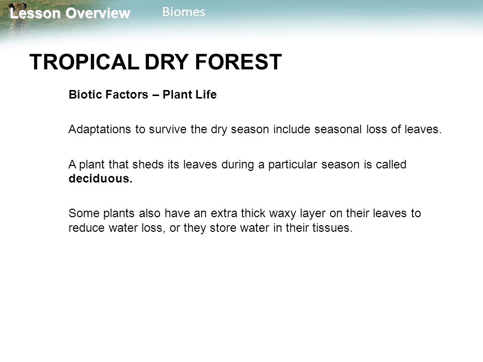TROPICAL DRY FOREST Biotic Factors – Plant Life