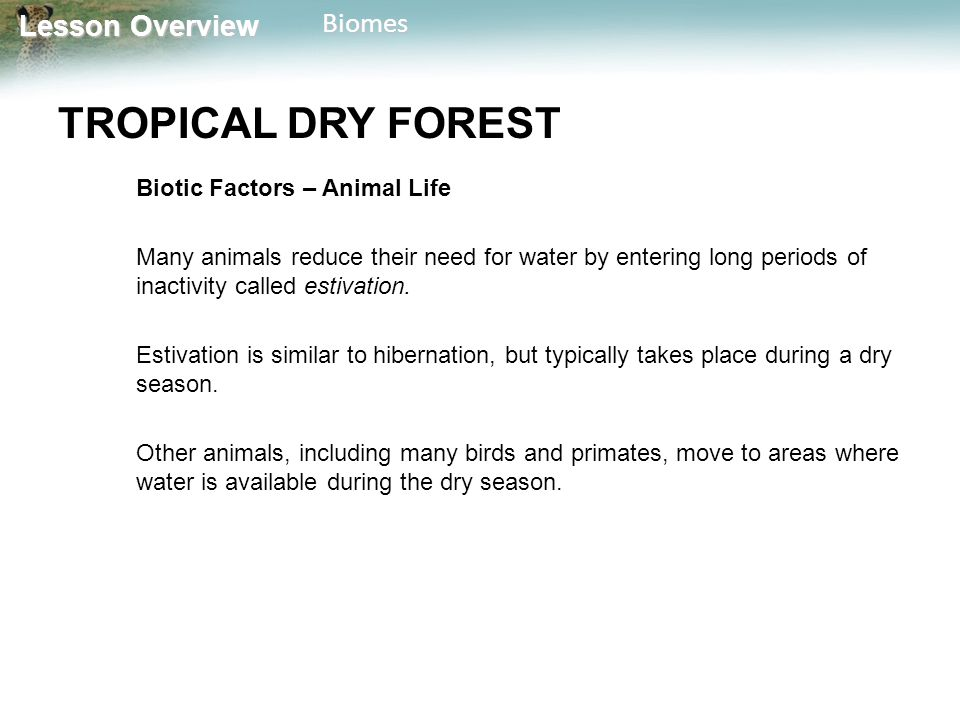 TROPICAL DRY FOREST Biotic Factors – Animal Life