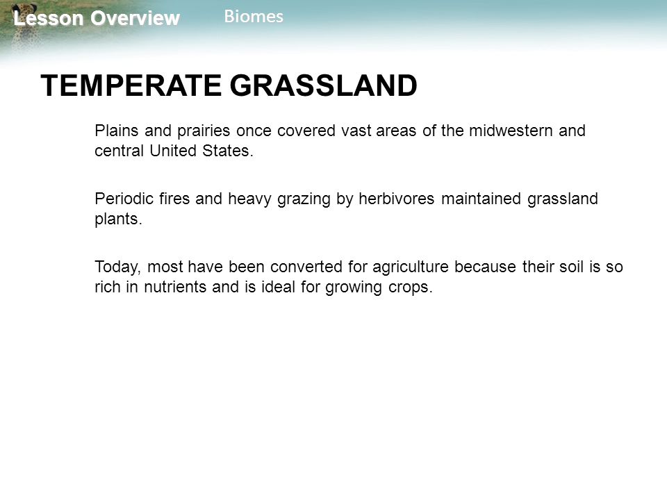 TEMPERATE GRASSLAND Plains and prairies once covered vast areas of the midwestern and central United States.