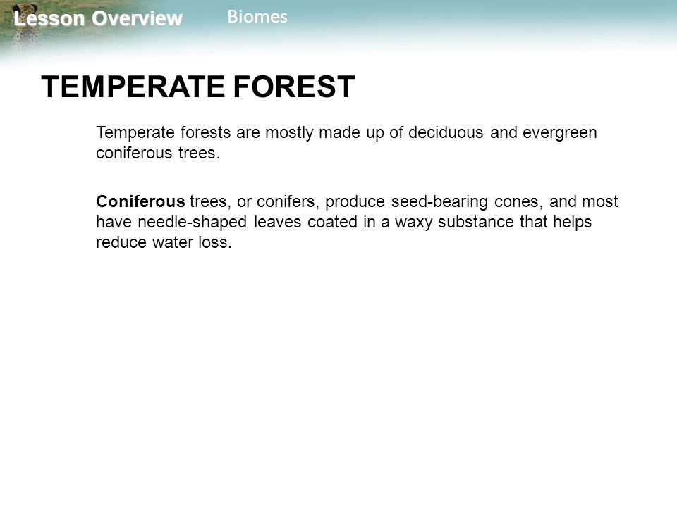 TEMPERATE FOREST Temperate forests are mostly made up of deciduous and evergreen coniferous trees.