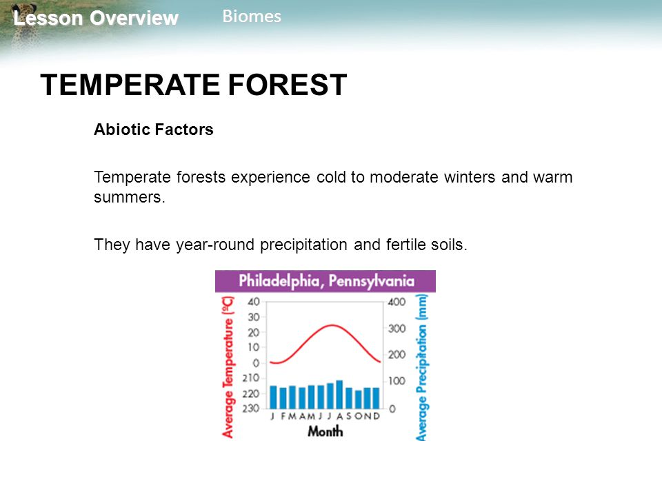 TEMPERATE FOREST Abiotic Factors