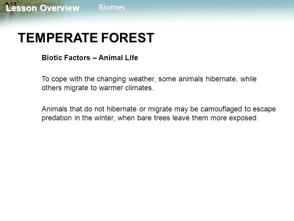 TEMPERATE FOREST Biotic Factors – Animal Life