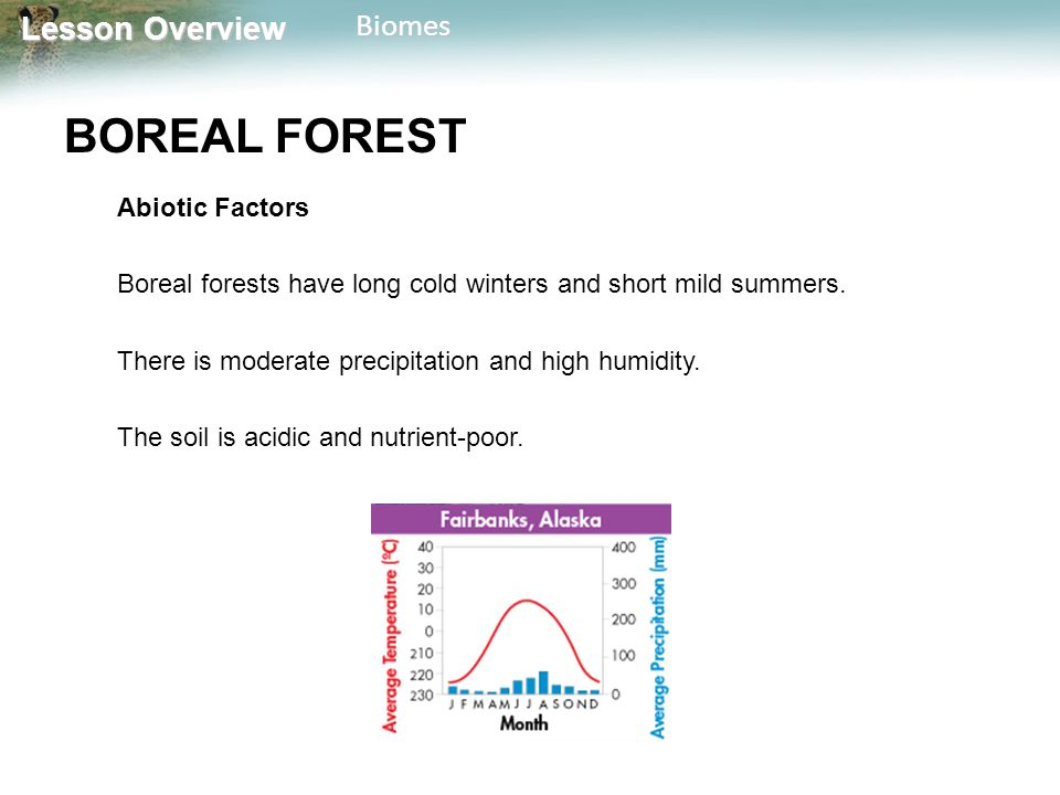 BOREAL FOREST Abiotic Factors