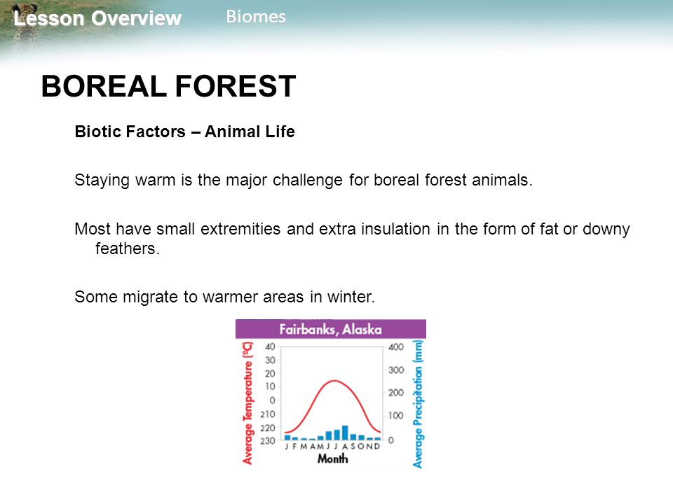 BOREAL FOREST Biotic Factors – Animal Life