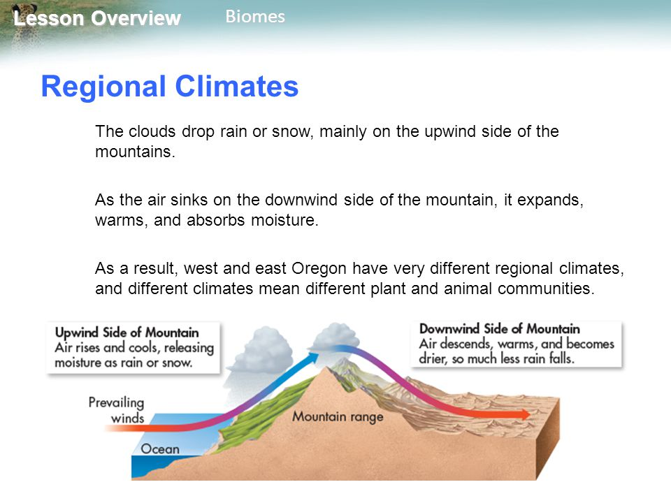 Regional Climates The clouds drop rain or snow, mainly on the upwind side of the mountains.