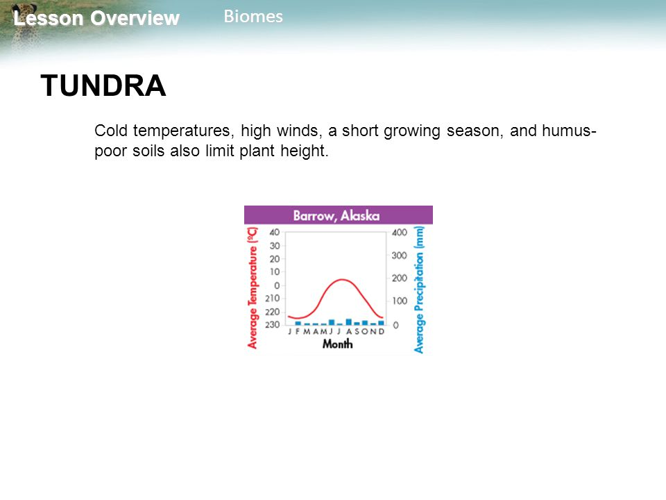 TUNDRA Cold temperatures, high winds, a short growing season, and humus-poor soils also limit plant height.