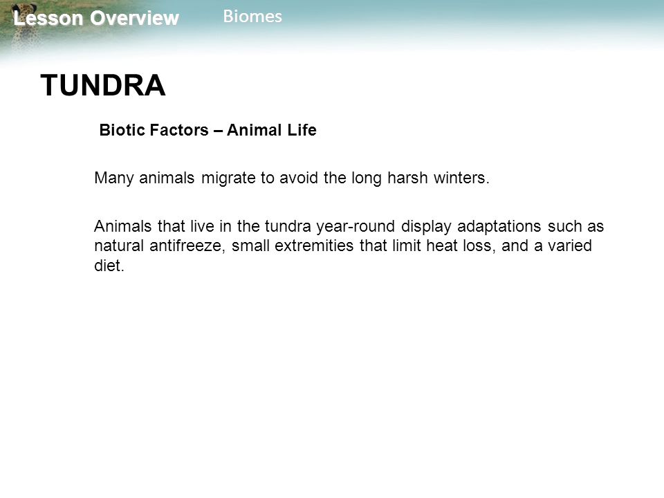 TUNDRA Biotic Factors – Animal Life