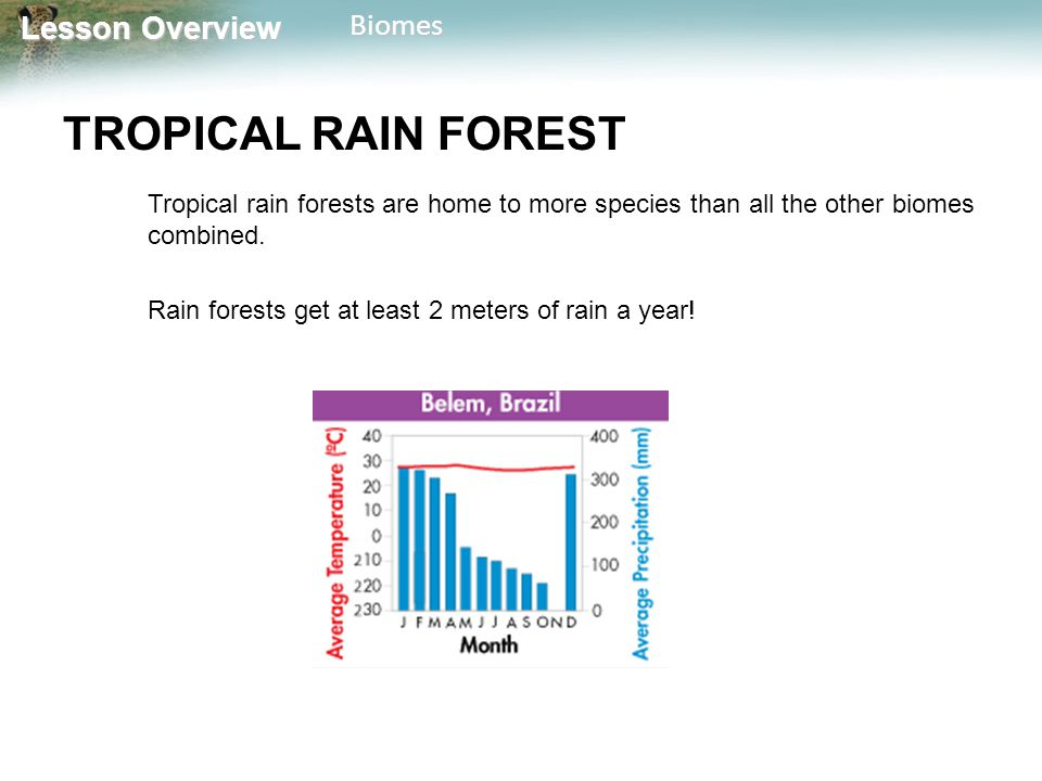 TROPICAL RAIN FOREST Tropical rain forests are home to more species than all the other biomes combined.