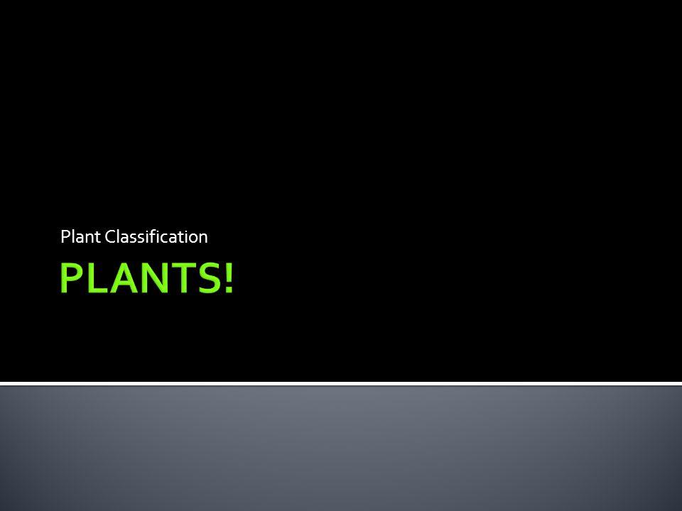 Plant Classification PLANTS!