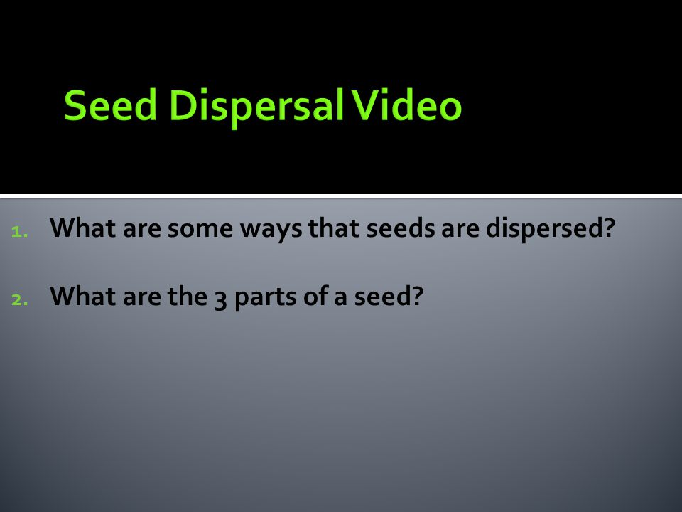 Seed Dispersal Video What are some ways that seeds are dispersed