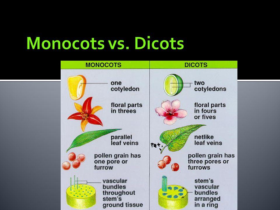 Monocots vs. Dicots