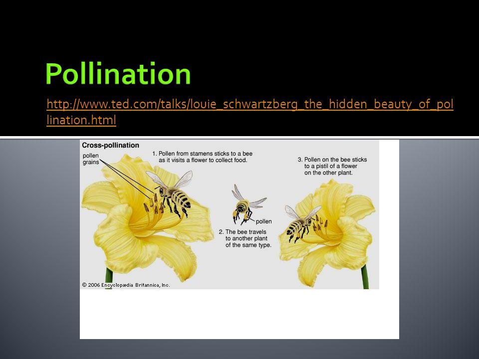 Pollination http://www.ted.com/talks/louie_schwartzberg_the_hidden_beauty_of_pollination.html